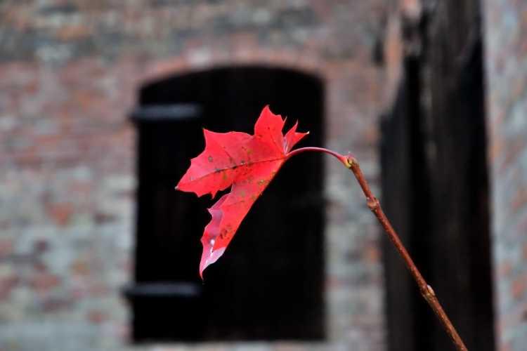 """Herbstgruß aus Krottorf"", Foto © Friedhelm Denkeler 2010"