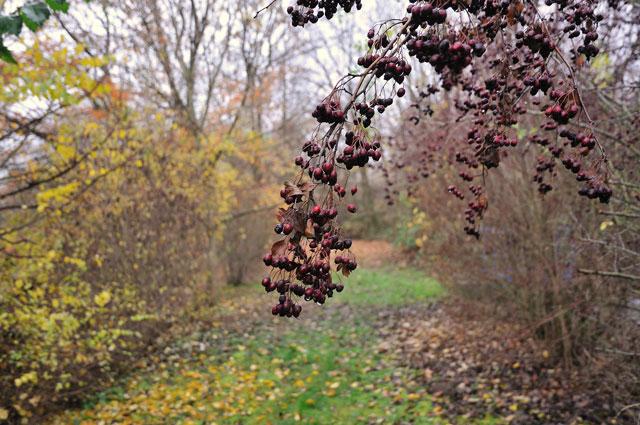 """Rote Beeren an der Bode"", Foto © Friedhelm Denkeler 2011"