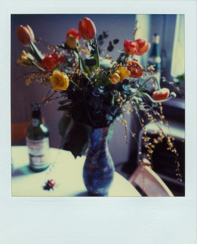 """Tulips"", Foto © Friedhelm Denkeler 1985"
