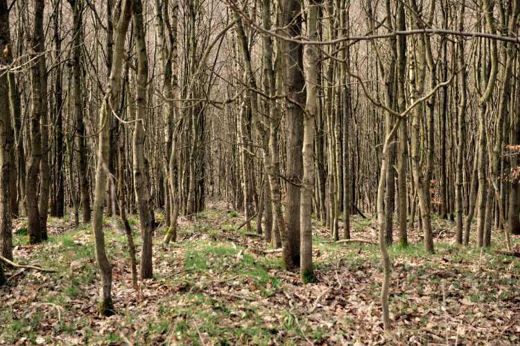 »Buchenwald in der Granitz«, Rügen, Ostsee, Naturschutzgebiet Granitz, Foto © Friedhelm Denkeler 2012