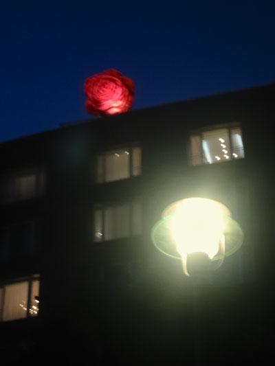 """Rote Rose"", Foto © Friedhelm Denkeler 2003"