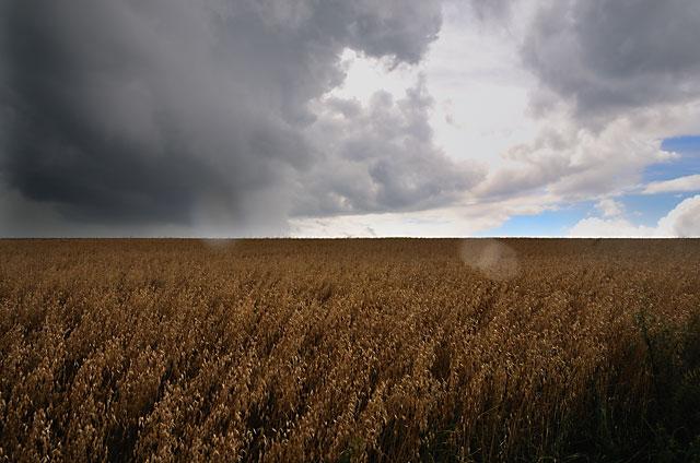 """Gewitterwolke über Kornfeld"", aus ""Horizonte"", Foto © Friedhelm Denkeler 2008"