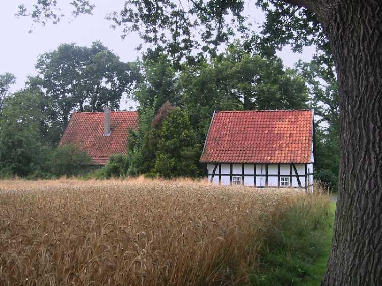 »Kornfeld in Rahden«, Ost-Westfalen, aus dem Portfolio »Sonntagsbilder«, Foto © Friedhelm Denkeler 2004