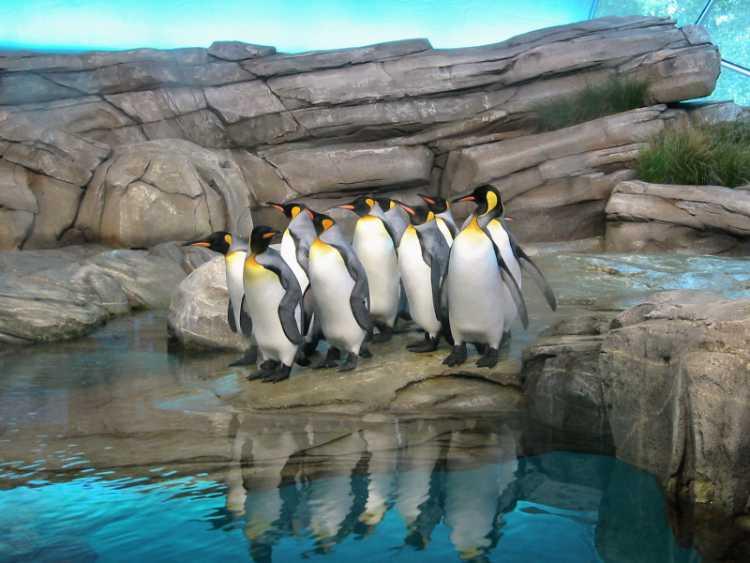 »Pinguine im Berliner Zoo«, aus dem Portfolio »Sonntagsbilder«, Foto © Friedhelm Denkeler 2002