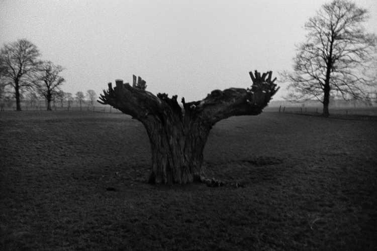»Ein Weidenbaum während der Wintersonnenwende«, aus der Portfolio »Die Harmonie eines Augenblicks«, 1982, Foto © Friedhelm Denkeler 1982