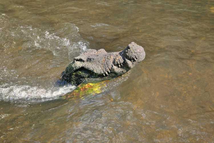 »Das Krokodil im Freiburger Bächle1, Foto © Friedhelm Denkeler 2014