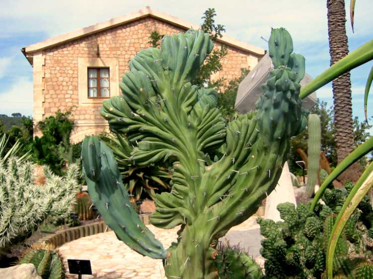 »Jardín Botánico de Sóller», Foto © Friedhelm Denkeler 2003