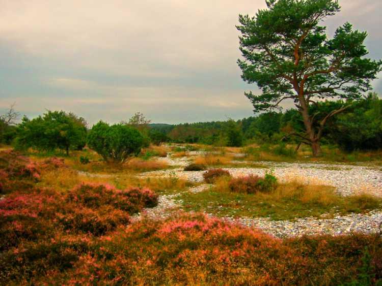 »Die Feuersteinfelder von Mukran«, Rügen, Ostsee, Foto © Friedhelm Denkeler 2004