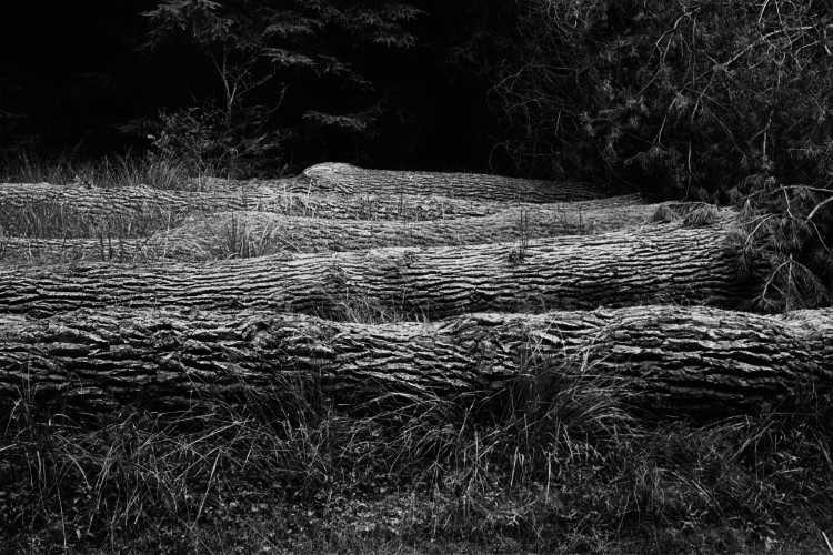 »Fünf Schlafende«, aus dem Portfolio »Der Elmgeist«, Foto © Friedhelm Denkeler 1980