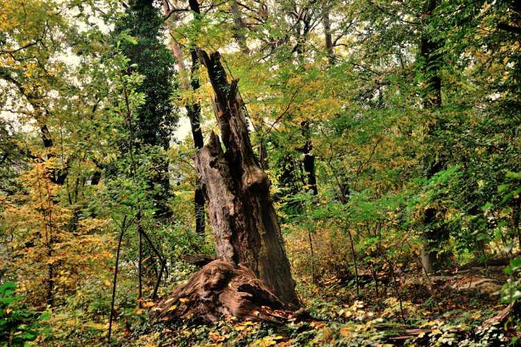 »Was vom Baume übrig blieb«, Foto © Friedhelm Denkeler 2014