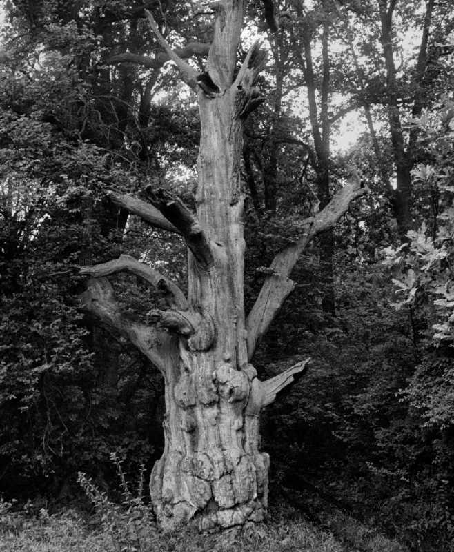 »Alter Geist I«, aus dem Portfolio »Der Elmgeist«, Foto © Friedhelm Denkeler 1980