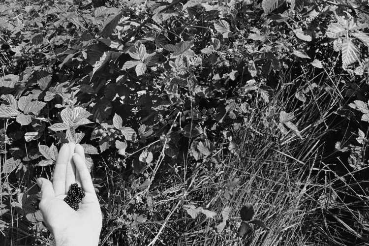 »Frische Ernte«, aus dem Portfolio »Sommer in einer Hand«, Foto © Friedhelm Denkeler 1985