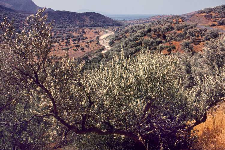»Landschaft bei Aghia Galini mit Flusstal des Platis«, Kreta, Foto © Friedhelm Denkeler 1976