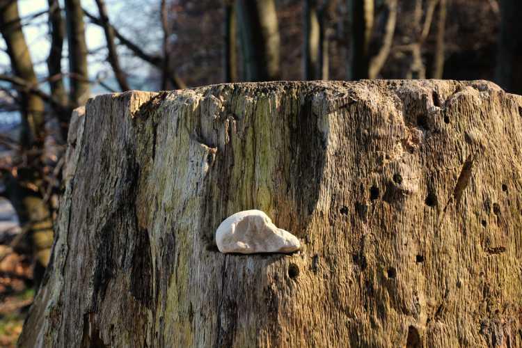 »Stillleben in der der Granitz«, Rügen, Foto © Friedhelm Denkeler 2010