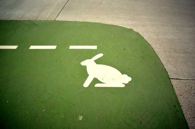 »Ein Hase im Park am Gleisdreieck«, Foto © Friedhelm Denkeler 2014