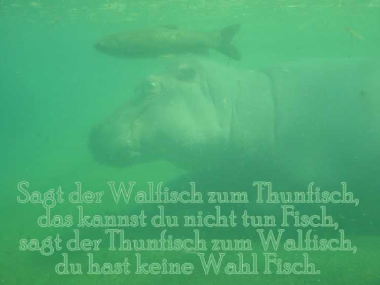 »Sagt der Walfisch zum Thunfisch, das kannst du nicht tun Fisch, sagt der Thunfisch zum Walfisch, du hast keine Wahl Fisch«, Foto/Grafik © Friedhelm Denkeler 2003