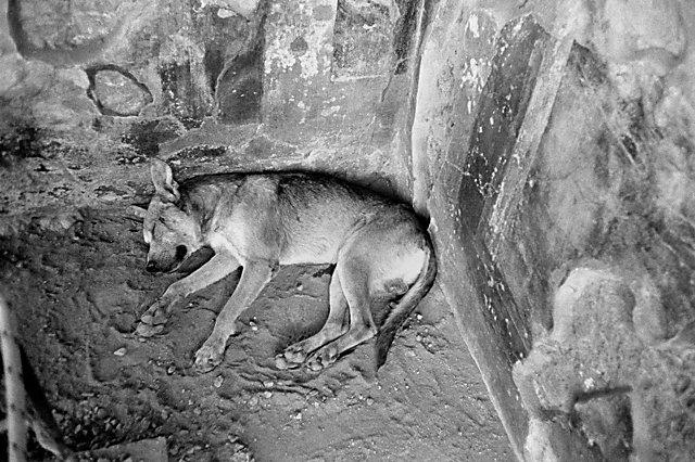 »Der Bewacher von Pompeji hält Mitttagschlaf«, Foto © Friedhelm Denkeler 1988
