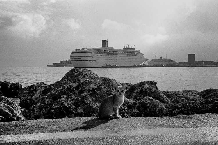 »Ich kann auch Katzenfotos«, Rhodos, Foto © Friedhelm Denkeler 1997