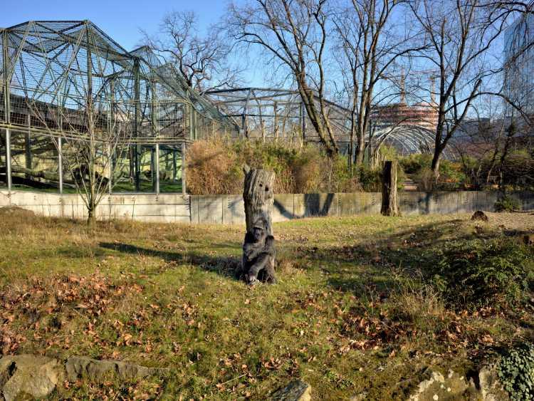 »The Apeman« (Zoologischer Garten«, Berlin), Foto © Friedhelm Denkeler 2019