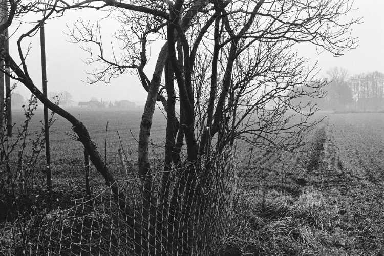 »Westfälische Landschaft im Morgennebel«, Foto © Friedhelm Denkeler 1979, aus dem Portfolio »Wer zuerst kommt, mahlt zurest! – Die Westfälische Mühlenstraße im Kreis Minden-Lübbecke«, Foto © Friedhelm Denkeler 1979
