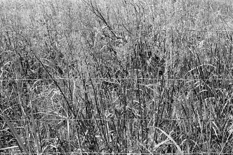 »Sommerwiese in Schnackenburg», Foto © Friedhelm Denkeler 1979