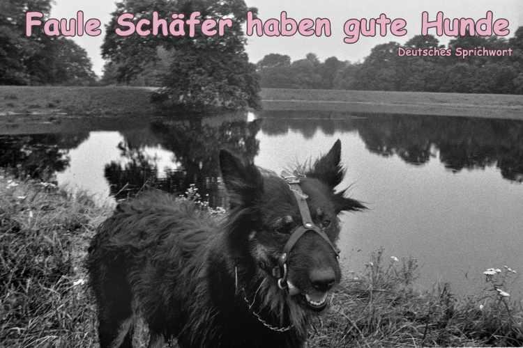 »Faule Schäfer haben gute Hunde«, Deutsches Sprichwort, Foto+Grafik © Friedhelm Denkeler 2014