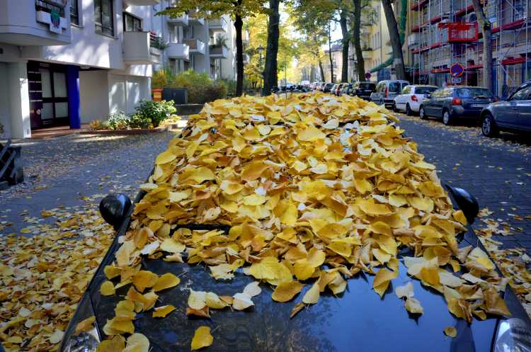 »Herbst in der Leydenallee«, Foto © Friedhelm Denkeler 2018