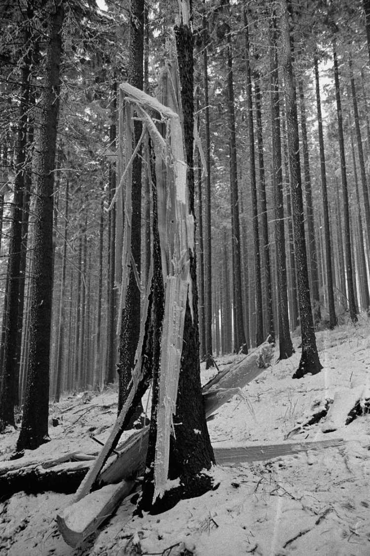 »Winter im Tannenwald«, Foto © Friedhelm Denkeler 1976