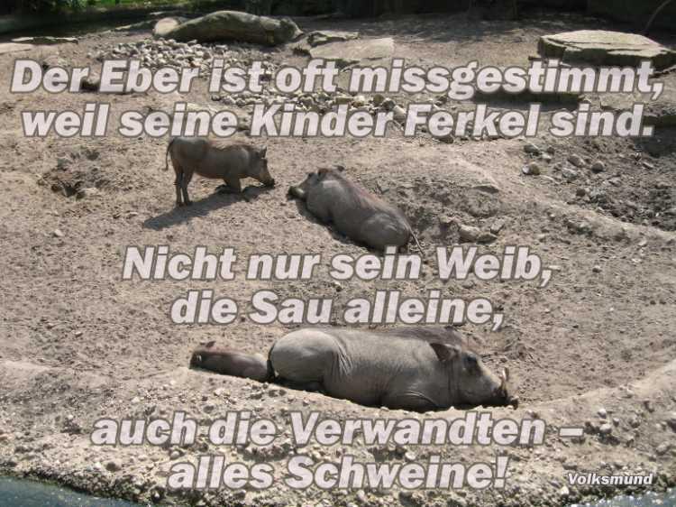 »Der Eber ist oft missgestimmt, weil seine Kinder Ferkel sind. Nicht nur sein Weib, die Sau alleine, auch die Verwandten – alles Schweine«, Foto/Grafik © Friedhelm Denkeler 2006