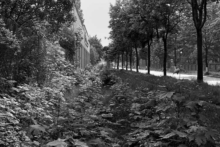 »Alte Eisenbahntrasse», Berlin-Neukölln, aus dem Portfolio »Harmonie eines Augenblicks«, Foto © Friedhelm Denkeler 1979