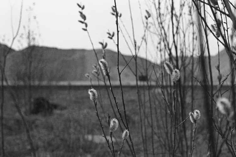 »Weidenkätzchen vor den Sandbergen», Foto © Friedhelm Denkeler 1979